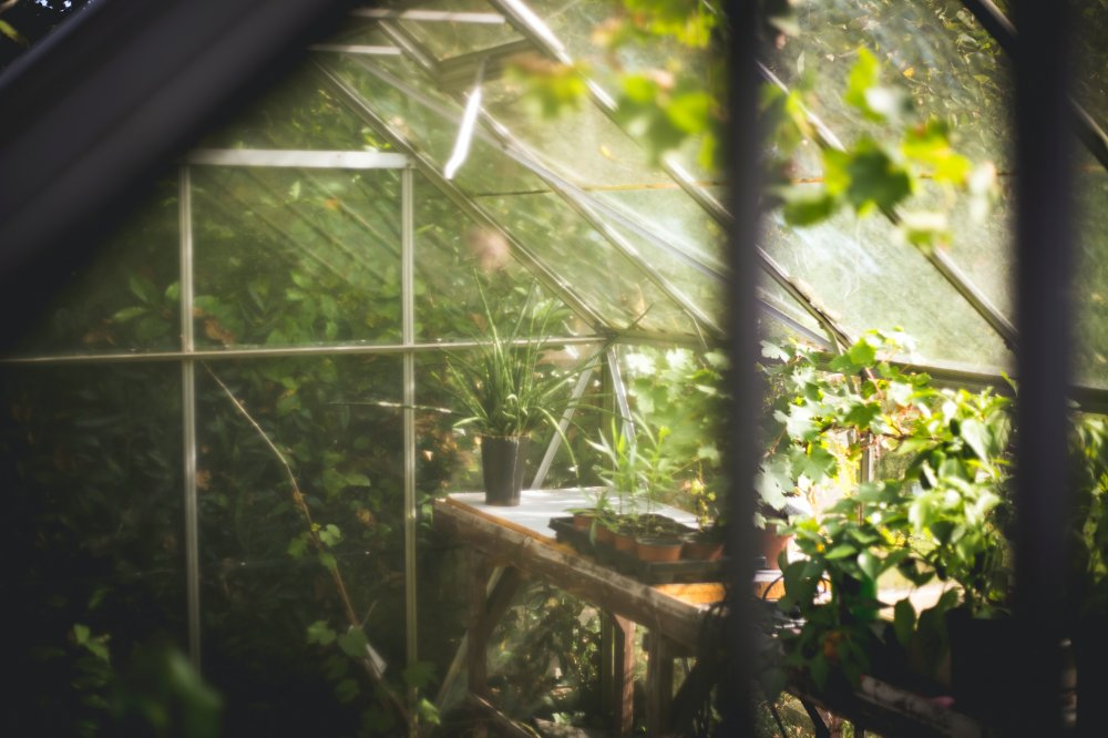 Bygg ett växthus med plastskivor för extra bra hållbarhet