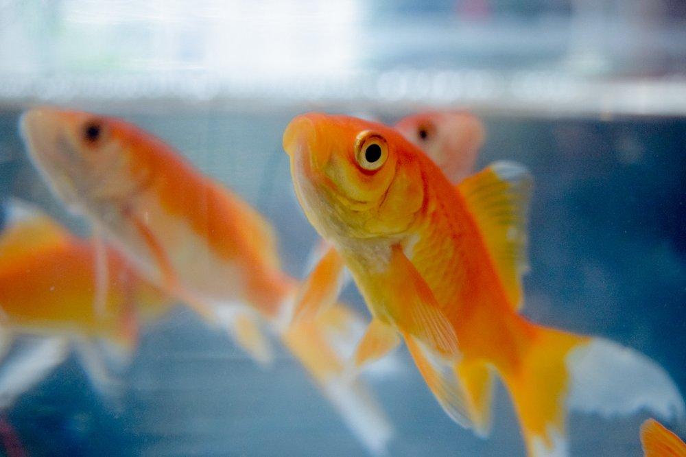 Se till att fiskarna mår bra med rätt akvarietillbehör